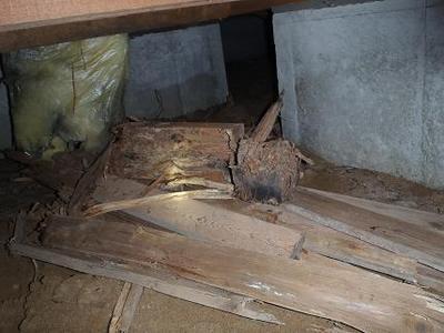 石川県金沢市ダスキン諸江町支店・シロアリ被害画像