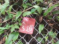 【3巡目-160】 23番薬王寺から、南阿波サンライン、牟岐、内妻まで 〈その6〉[2016年8月13日]