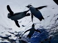 天空のペンギン♪