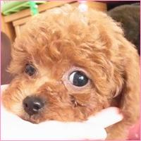 犬の性格と躾