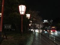 夜桜見物〜兼六園〜