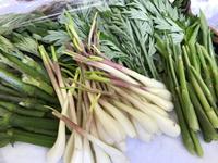 春の山菜天ぷらまつり